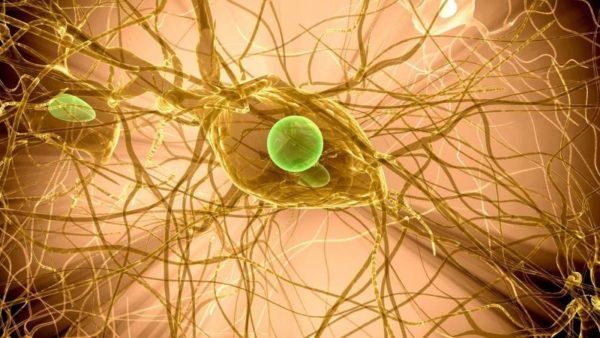 Вирус герпеса под микроскопом